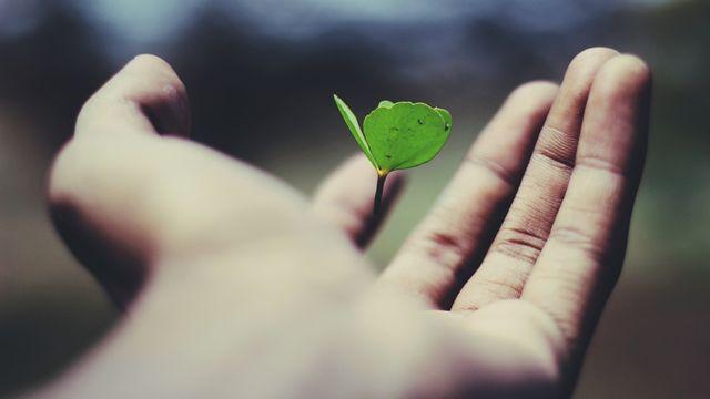 手のひらから芽生えた希望